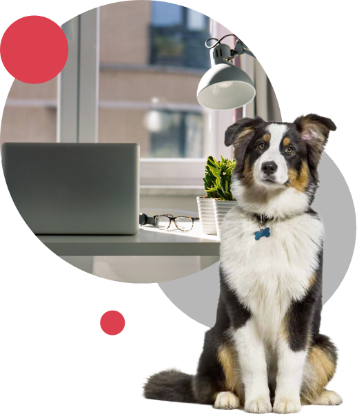 Collie and office in circles