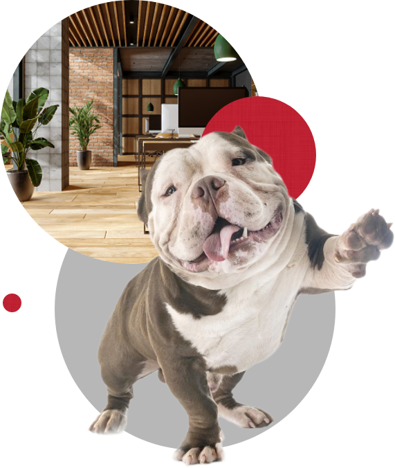 English bulldog with office in circles